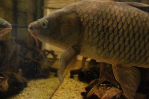 Imagen de uno de los acuarios de la Casa del Río