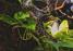 Culebra viperina de la Casa del Río