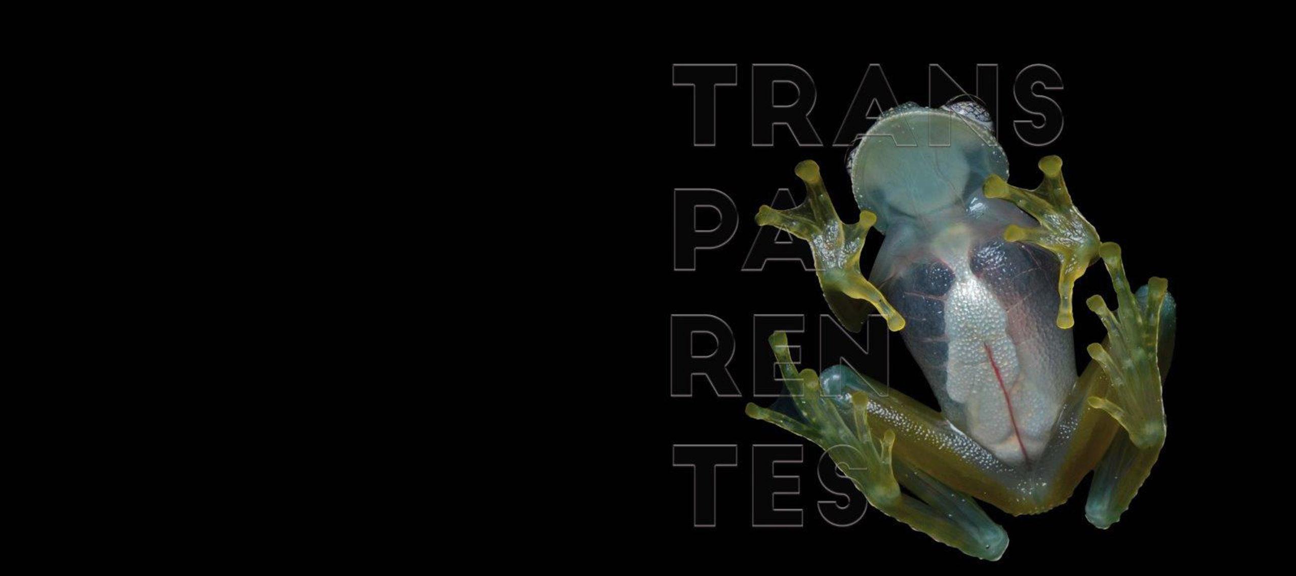 Exposición Transparentes
